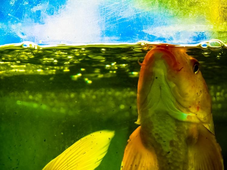fishfriend